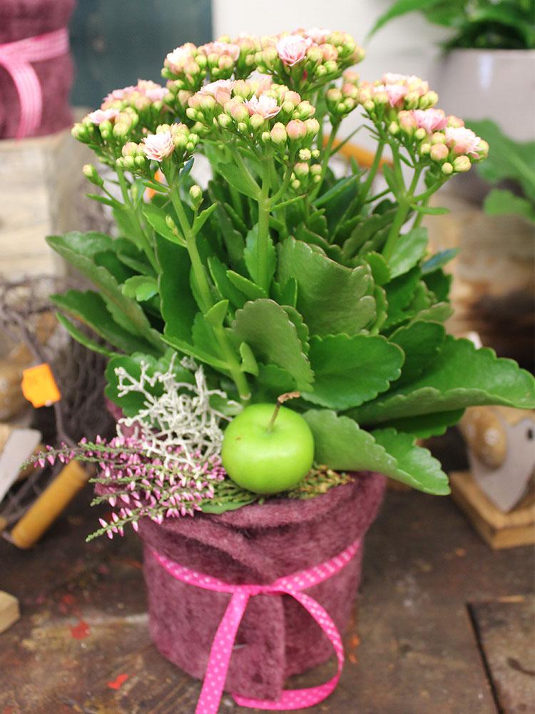 Topfpflanzen anna 39 s blumen for Topfpflanzen dekorieren